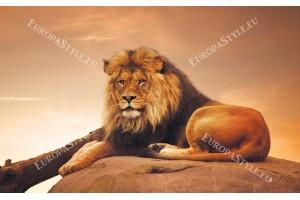 Фототапети голям лъв на залез фон