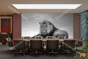 Фототапети голям лъв на сив фон