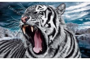 Фототапети глава на сърдит тигър в 2 цвята