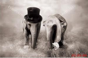 Фототапети двойка слонове като младоженци