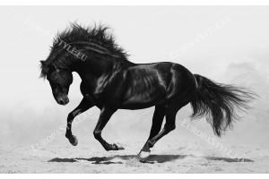 Фототапет прекрасен черен кон в 2 цвята