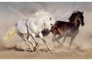 Фототапет двойка коне в галоп