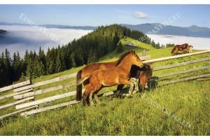 Фототапет конче и кобила на зелен планински скат