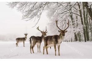 Фототапет елени през зимата в гората