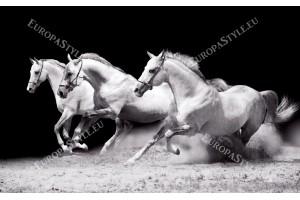 Фототапет тройка коне на черен фон