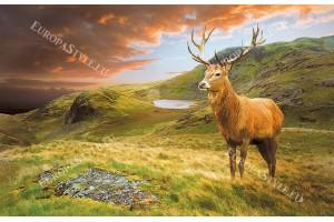 Фототапет красив елен изглед в планина