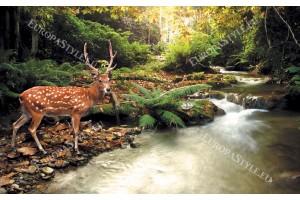 Фототапет красив елен изглед край река