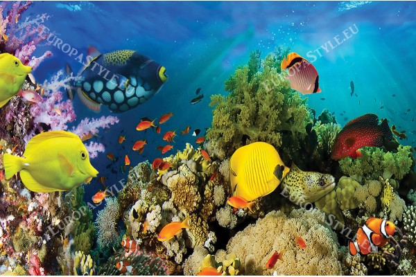 водно дъно рибки