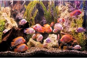 Фототапет аквариум с рибkи