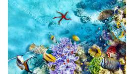 Фототапет тюркоазено морско дъно с корали