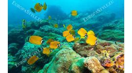 Фототапет тюркоазено морско дъно с жълти рибки