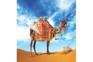 Фототапети пъстра камила сред пустиня