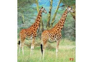 Фототапети двойка жирафи на рисуван фон