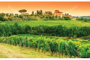 Фототапети лозови масиви красив изглед от Тоскана