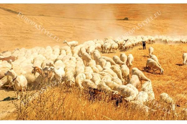 Фототапет поле със стадо овце