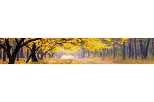 Фотопринт за кухня есенна гора
