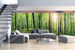 maxi макси изглед панорама зелена гора 2