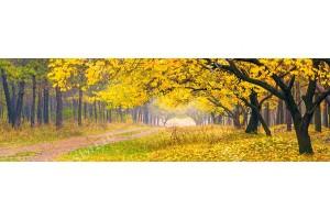 Фототапет макси размер жълта гора и пътека