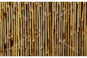 Фототапет-50% размер 330 см-210 см - Бамбук кафяв