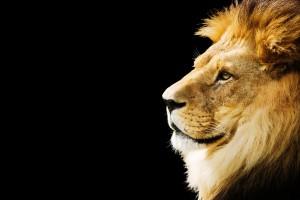 Лъв, леопард и тигър