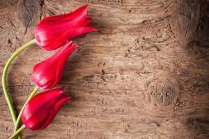 Фототапети Цветя