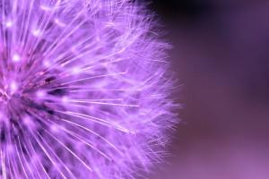 Цветя в лилаво