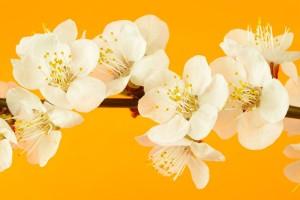 Цветя в оранжево