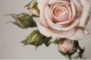 Цветя в розово и циклама