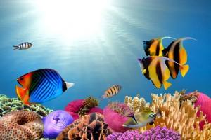Водно и морско дъно