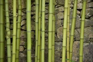 Бамбук и листа