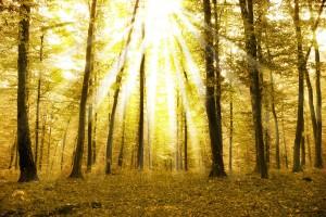 Гори и дървета